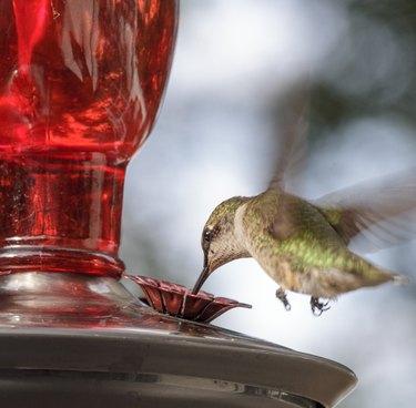 Humming bird at feeder