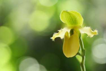 How to Repot Orchids