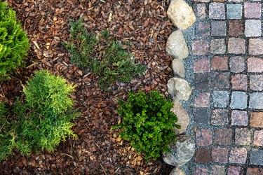 edge paver tree