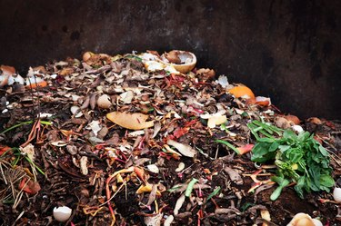 Composting pile of vegetables fruits. Concept Organic waste, clean environment