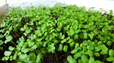 Close-Up Of Clover Growing In Yard