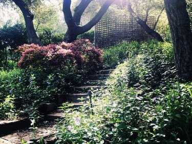 Magical stairs and garden in the forest