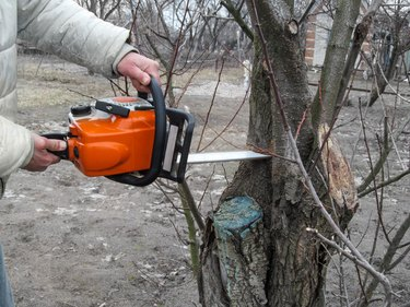 Cutting off branches of a diseased tree with chainsaw in the garden