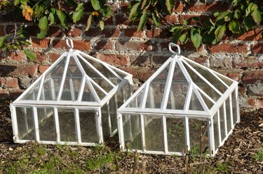 White cloches.