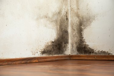 Black mould on a wet wall