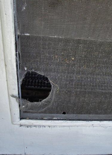 Hole in screen door.