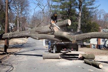 Cutting tree.