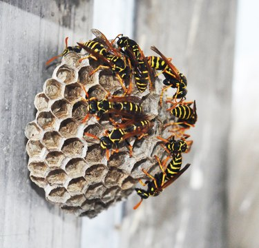 How To Get Rid Of Yellow Jacket Nests