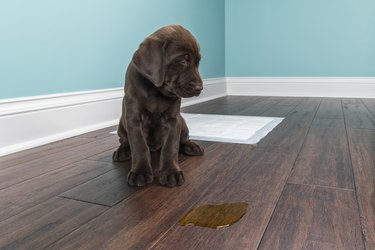 How to Remove Pet Stains on Hardwood Floors