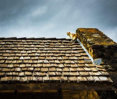 Cat on wood roof.