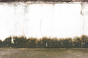 White wall with mildew.