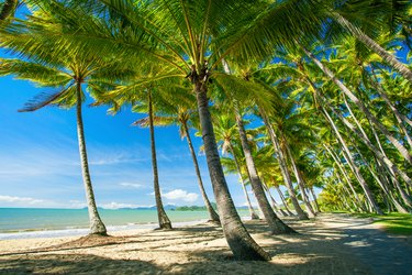 Palm trees on the beach of Palm Cove
