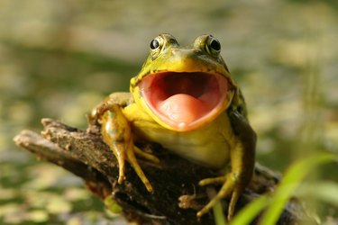 How to Get Rid of Croaking Frogs