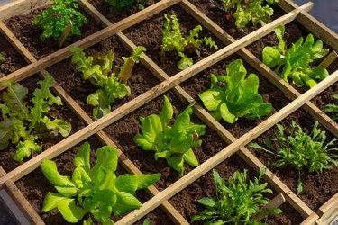 Square meter of urban vegetable garden