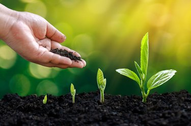 tree sapling hand planting sprout in soil with sunset close up male hand planting young tree over green background
