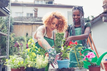 Two young woman potting plants in garden.