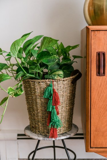 Basket with plant