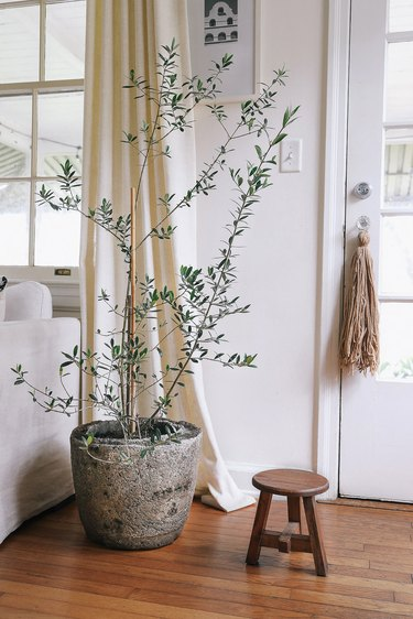 Hypertufa pot with olive tree next to white couch in living room
