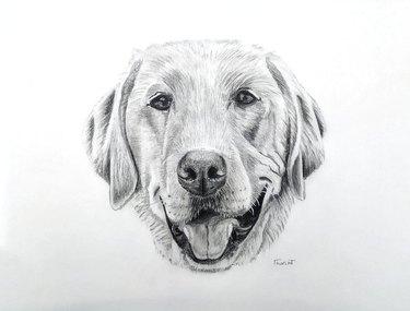 Hand-drawn portrait of dog