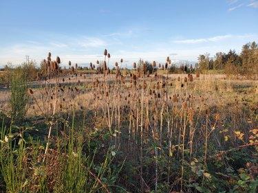 Pacific Northwest wetlands