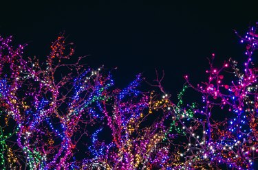 multicolor holiday lights on trees at night