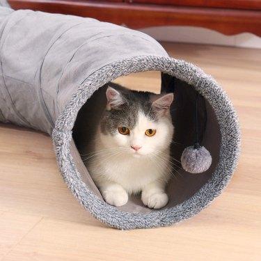cat in gray cat tunnel