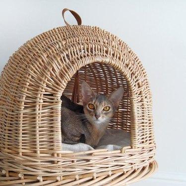 cat in a cat pod