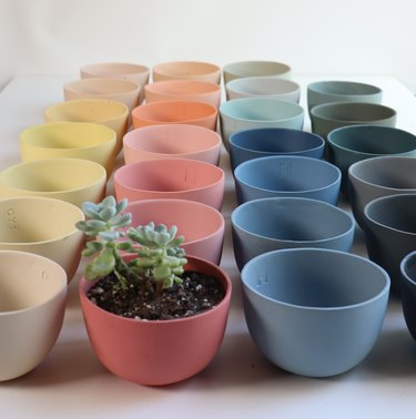 Small ceramic planters in multiple colors lined up together with one succulent.