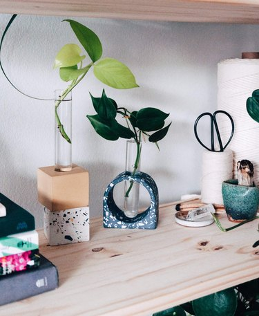 shelf with plants in propagations vases