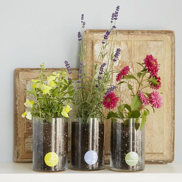 three flowers in grow kits