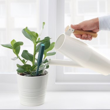 Chilipulver Plant Watering Sensor