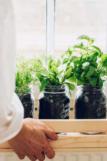 Indoor cocktail herb garden by window in wood box