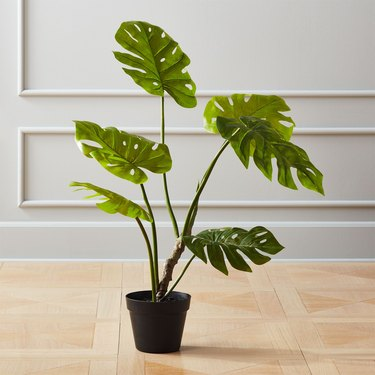 faux monstera plant in black pot on hardwood floor