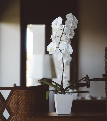 white orchid in white vase
