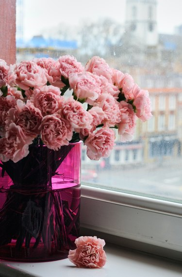 pink carnations in hot pink vase by window