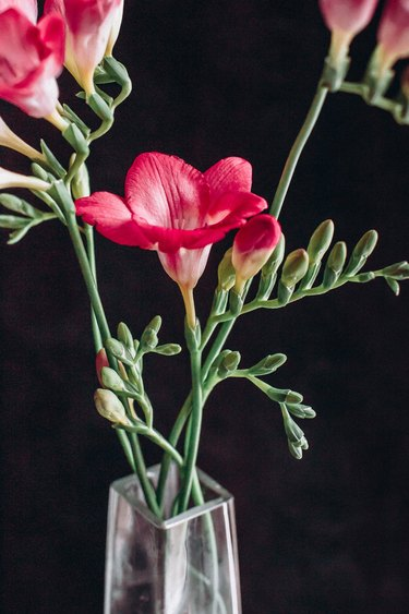 red freesia in vase with black background