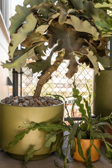 Plants in vintage pots on balcony