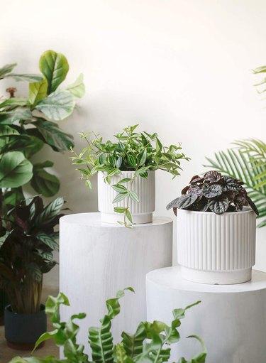Best Planter Destinations amazon