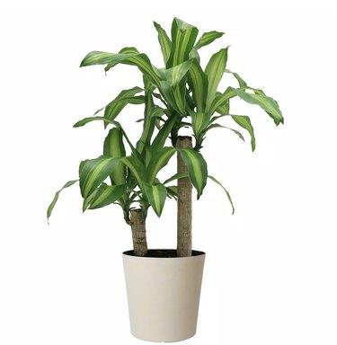 Home Depot Plants