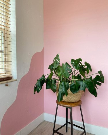 plant near a wavy accent wall