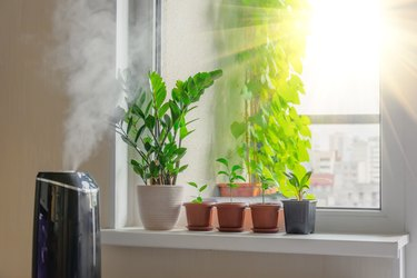 Indoor decorative and deciduous plants on the windowsill in an apartment with a steam humidifier, against the background outside the window of the city and multi-storey buildings.