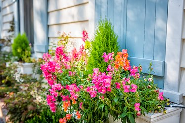 Pastel blue color window and pink orange flowers in planter as decorations on sunny summer day architecture in Charleston, South Carolina