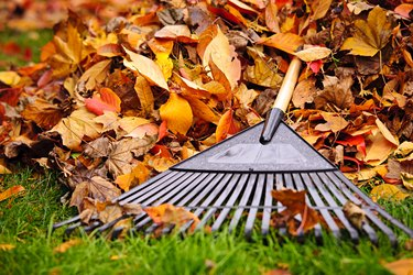 Fall leaves in the green grass with a rake laying on them