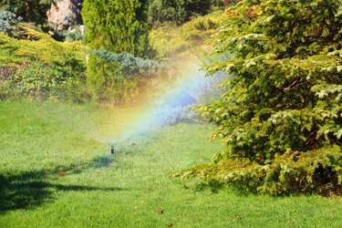 Rainbow from sprinkler drops