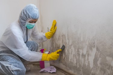 Professional Mold Remediation: Everything You Should Know