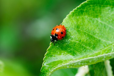 9 Natural Pest Control Remedies That Keep the Bugs at Bay