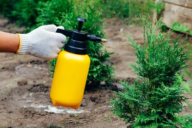 The 10 Best Products for Getting Rid of Pests at Home