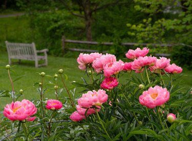 Full-Sun Plants: 20 Perennials for a Year-Round Garden