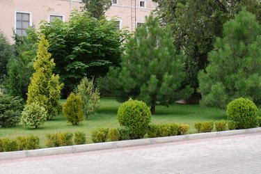 Landscape with decorative bushes and pines on a lawn near a pink house