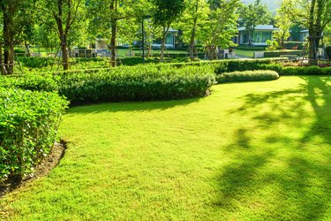 fresh, front, garden, gardening, grass, grassy, green, hedge, landscape, landscaped, landscaping, lawn, leaf, lush, meadow, morning light, nature, new, nobody, outdoor, park, plant, shrub, shrubbery, space, spring, suburban, succulent, summer, sunlight